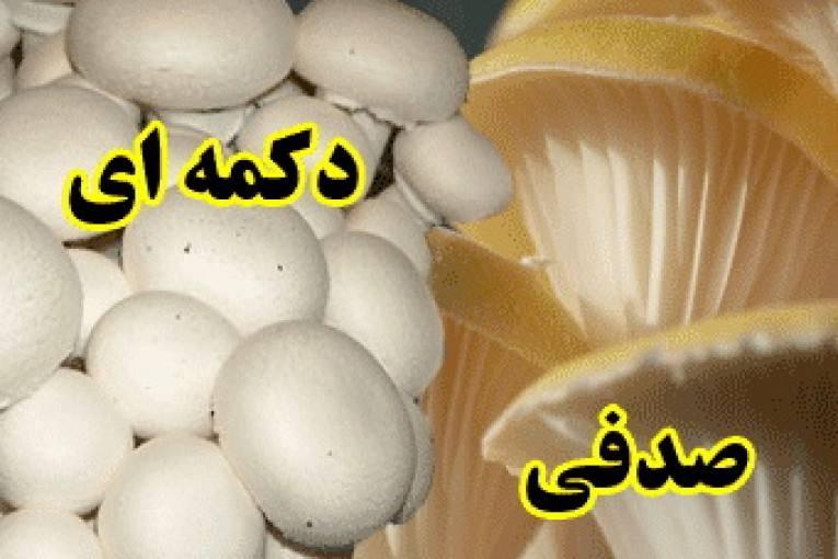 دانلود کتاب آموزش پرورش قارچهای صدفی و دکمهای