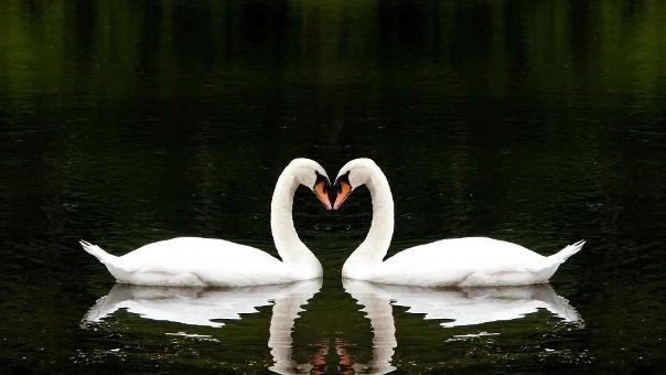 دانلود کتاب عشق برای عشق